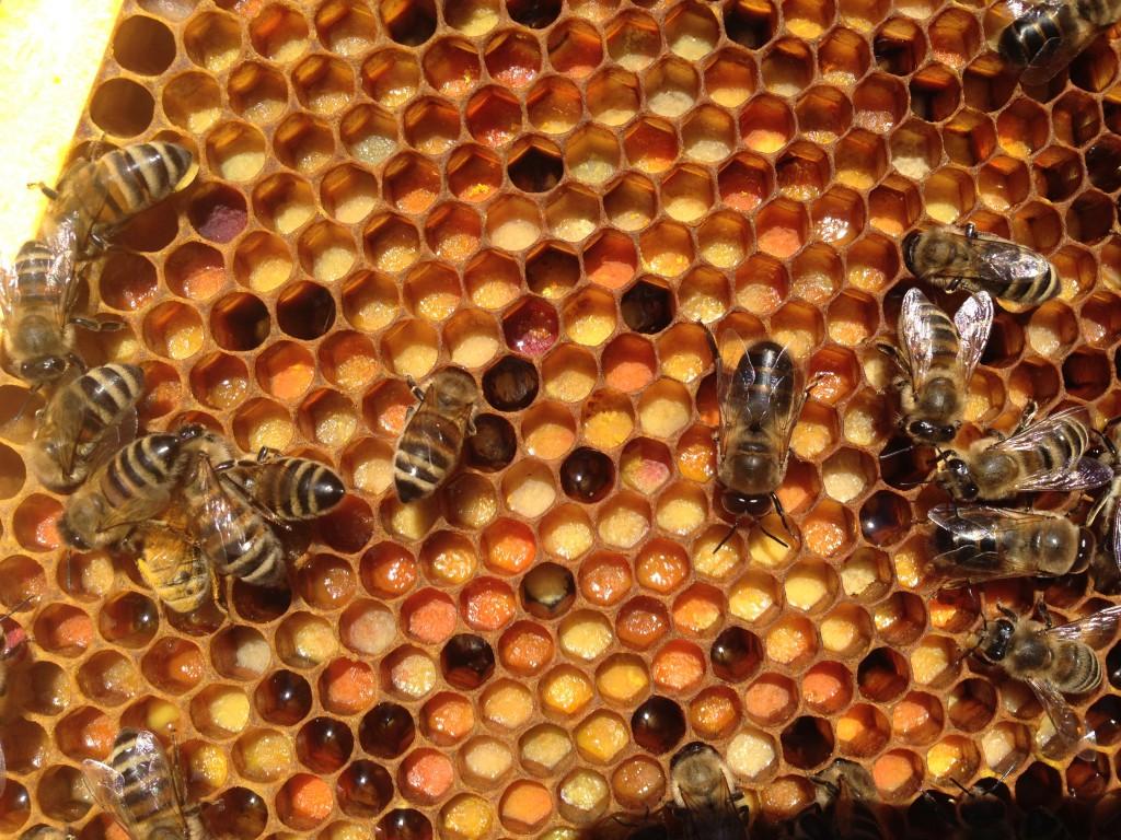 Pollen im Bienenvolk
