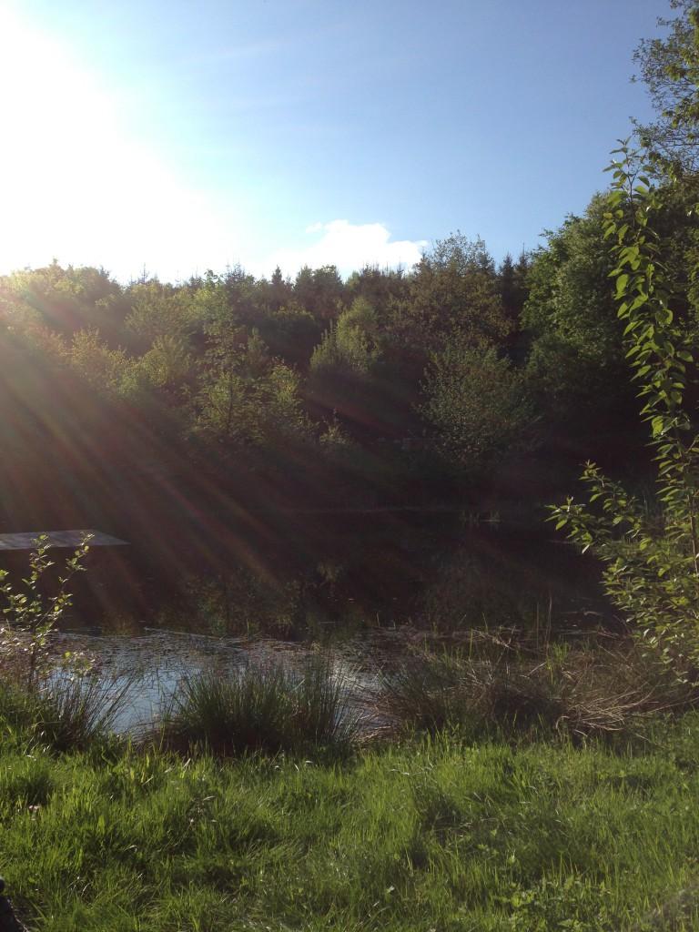 Ein Paradies mitten im Wald